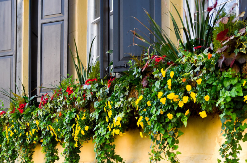 Charleston, Travel Blogger, Colorful, Window box, South Carolina, Colorful House